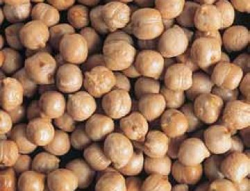 <strong>CHICKPEA</strong>
