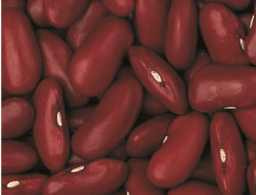 <strong>DARK RED KIDNEY</strong>
