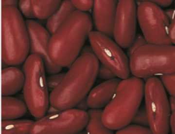 <strong>RED KIDNEY</strong>